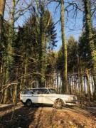 Volvo 240 im Wald 02.02.18
